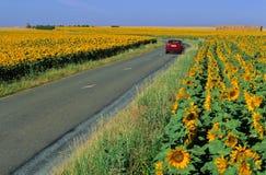 Estrada e girassóis Foto de Stock