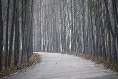 Estrada e linha de árvores Imagens de Stock Royalty Free