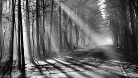 Estrada e raios de sol na névoa forte na floresta, Polônia filme