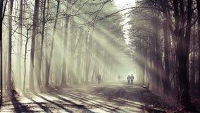 Estrada e raios de sol na névoa forte na floresta, Polônia vídeos de arquivo