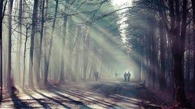 Estrada e raios de sol na névoa forte na floresta, Polônia video estoque