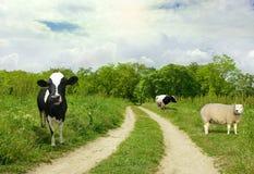 Estrada em animais do whith da floresta Fotos de Stock