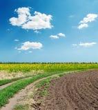 Estrada em campos da agricultura sob o céu azul Imagem de Stock