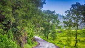 Estrada em jardins de chá Fotos de Stock Royalty Free