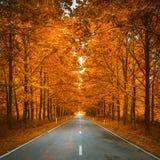 Estrada em madeiras do outono Fotografia de Stock