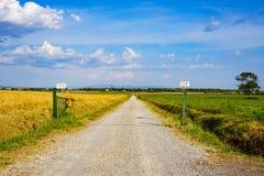 A estrada em Maremma, Itália imagem de stock