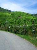Estrada em plantações de chá Imagens de Stock