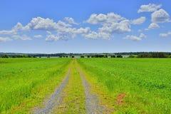 A estrada em Prince Edward Island Imagens de Stock