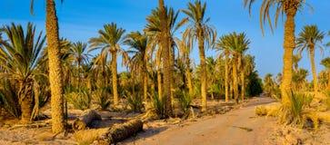 A estrada em um bosque da palma no nascer do sol fotografia de stock