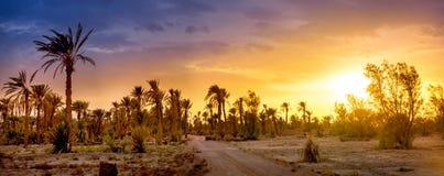 Estrada em um bosque da palma no por do sol fotografia de stock