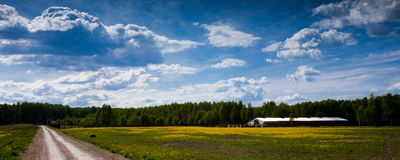Estrada em um campo amarelo Imagem de Stock Royalty Free