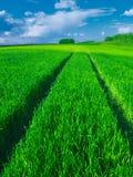 Estrada em um campo de trigo verde bonito Fotos de Stock