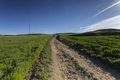 Estrada em um campo verde na mola Imagem de Stock Royalty Free