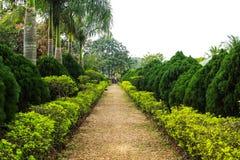 Estrada em um parque com árvore lateral fotografia de stock royalty free