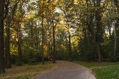 Estrada em um parque obscuro do outono Imagens de Stock Royalty Free