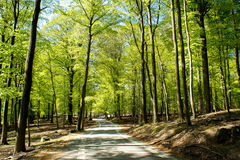 Estrada em uma floresta Fotos de Stock Royalty Free