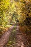 Estrada em uma floresta do outono Imagens de Stock