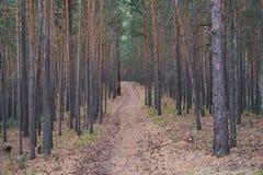 A estrada em uma floresta do pinho Fotografia de Stock
