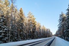 Estrada em uma floresta do pinho do inverno Fotografia de Stock Royalty Free