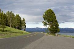 Estrada em Yellowstone Fotos de Stock