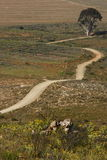 Estrada empoeirada que passa uma árvore Fotos de Stock Royalty Free