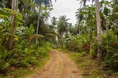 Estrada enlameada pequena que atravessa uma floresta tropical densa Fotografia de Stock