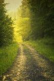 Estrada ensolarada Imagem de Stock