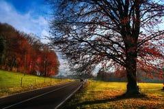 Estrada ensolarada do outono Fotografia de Stock Royalty Free