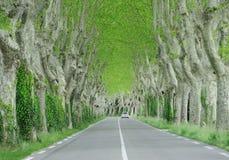 A estrada entre árvores Fotos de Stock