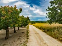 Estrada entre árvores de fruto foto de stock royalty free