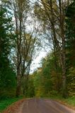 A estrada entre árvores do outono, árvores com amarelo e vermelho sae no lado Fotografia de Stock Royalty Free
