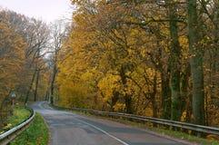 A estrada entre árvores do outono, árvores com amarelo e vermelho sae no lado Fotos de Stock Royalty Free