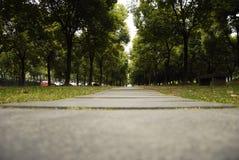 Estrada entre as madeiras Fotografia de Stock
