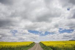 Estrada entre campos da colza sob as nuvens fotos de stock royalty free