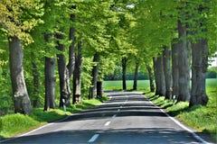 Estrada entre campos e árvores imagens de stock