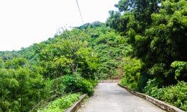 Estrada entre a floresta foto de stock