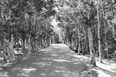 Estrada entre a floresta Imagens de Stock