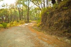 Estrada entre montes do pinheiro imagens de stock