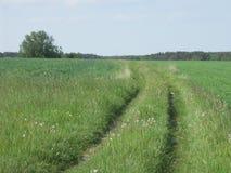 A estrada entre prados Fotos de Stock