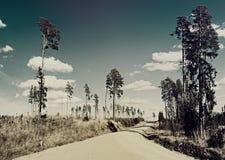 Estrada entre sobras da floresta do pinho Fotografia de Stock