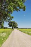 Estrada entre um campo Fotos de Stock Royalty Free