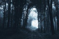 Estrada escura através da floresta misteriosa Foto de Stock