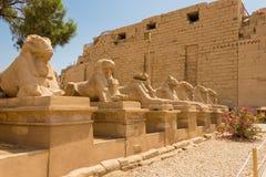 estrada Esfinge-alinhada em Luxor, Egito imagens de stock