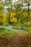 A estrada, espalhada com as folhas na floresta do outono imagens de stock royalty free