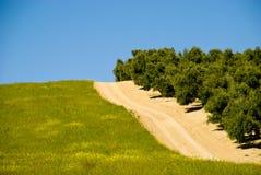 Estrada espanhola com oliveiras Foto de Stock Royalty Free