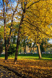Estrada a estacionar nas folhas do amarelo do outono Foto de Stock Royalty Free