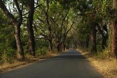 Estrada estreita ao longo das linhas de árvores na região de Cacheu no norte de Guine Bissau Imagens de Stock Royalty Free