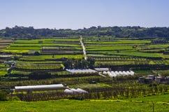 Estrada estreita no campo, Rabat Malta Foto de Stock Royalty Free