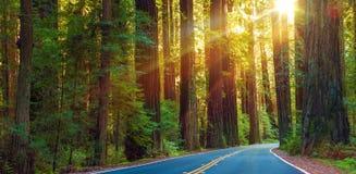 Estrada famosa da sequoia vermelha fotos de stock