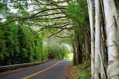 Estrada famosa a Hana preocupante com as pontes estreitas da um-pista, as voltas do gancho de cabelo e as opiniões incríveis da i Fotos de Stock Royalty Free